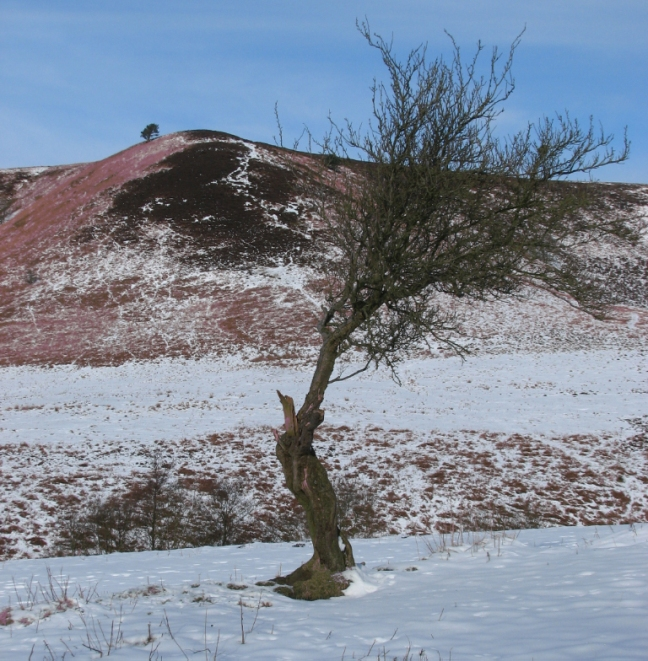 north-york-moors-feb-09-025